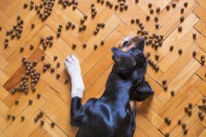Hund auf Fußboden